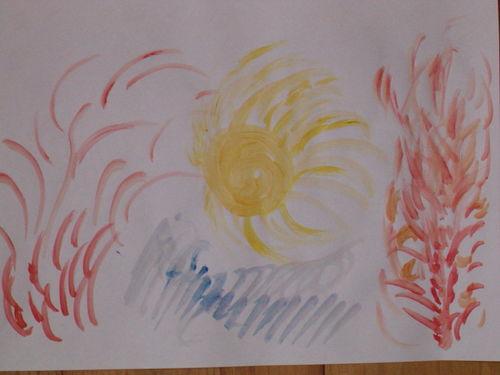Sun flame tree